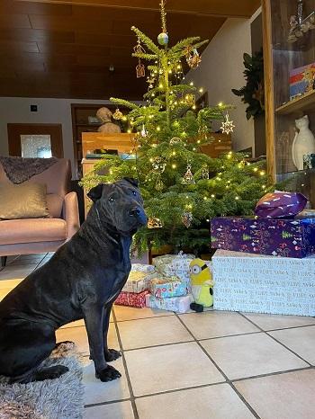 Shiwa wünscht Frohe Weihnachten