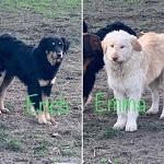 Die Geschwister Erich und Emma